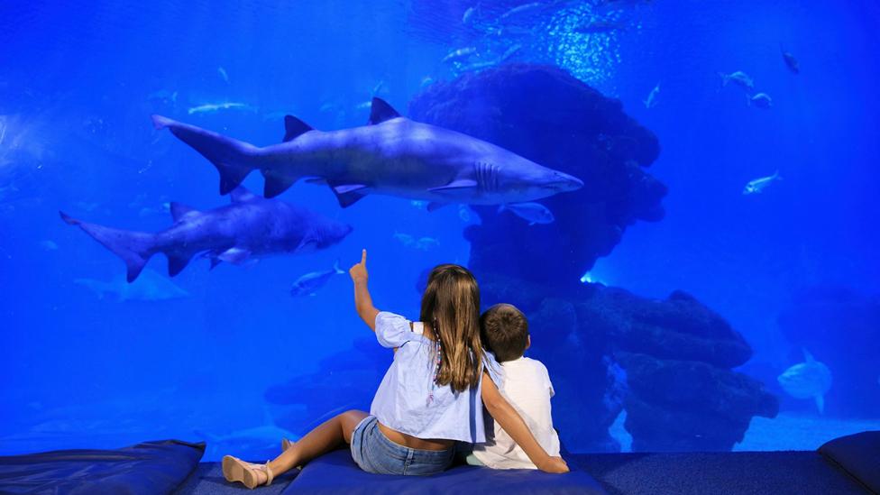 aquario de palma con niños